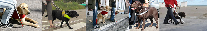 photos of guide dogs